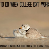 WHAT TO DO IF COLLEGE ISN'T WORKING OUT